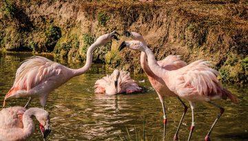 livet-med-gigt-flamingo-servicegen-indlag