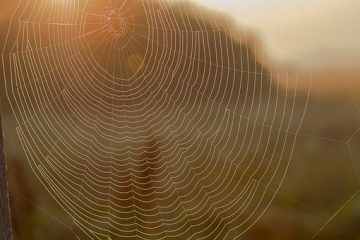 Livet-med-gigt-edderkoppespind-2018